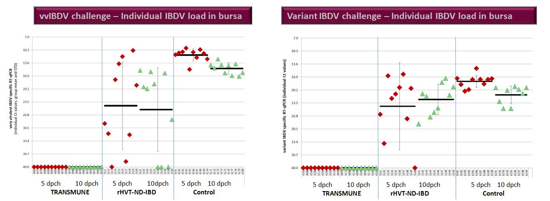 trial challenge variants-1